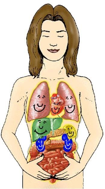 05 Organs
